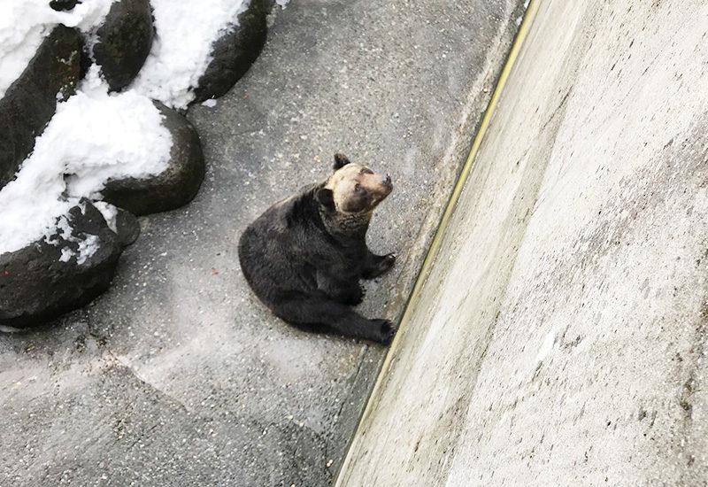 奥飛騨 クマ牧場 ヒグマ