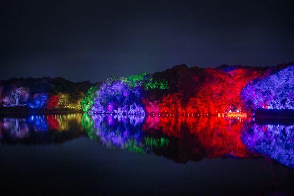 メッツァビレッジ チームラボ 森と湖の光の祭