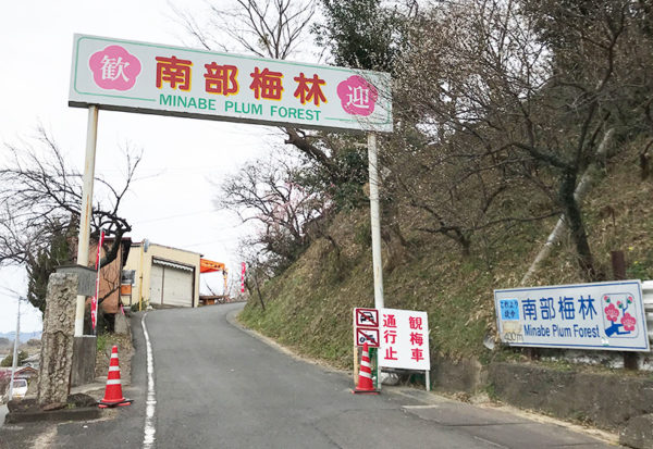 和歌山 日帰り バスツアー 南部梅林 入園門