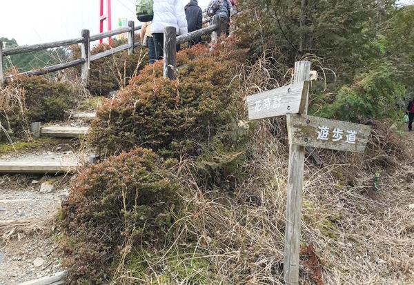 和歌山 ヤッホーポイント グリーンパーク椿山